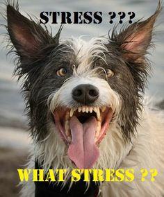 stress whatstress
